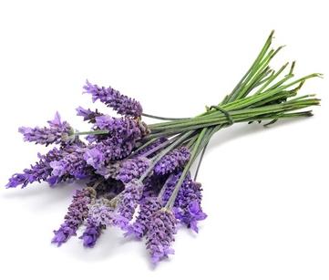 Lavendel hydrolat
